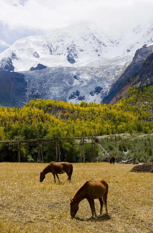 U stop gory pokrytej sniegiem kwitnace pola i konie pasace sie na lace. Zima w lecie. Wielki Boze