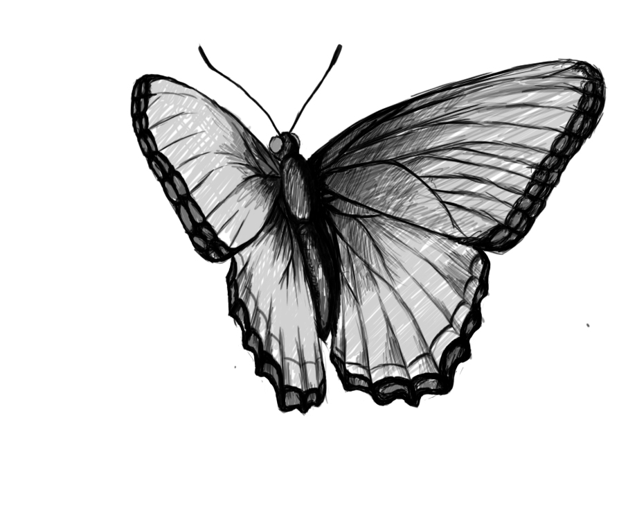 Butterfly Drawing ~ 3D...