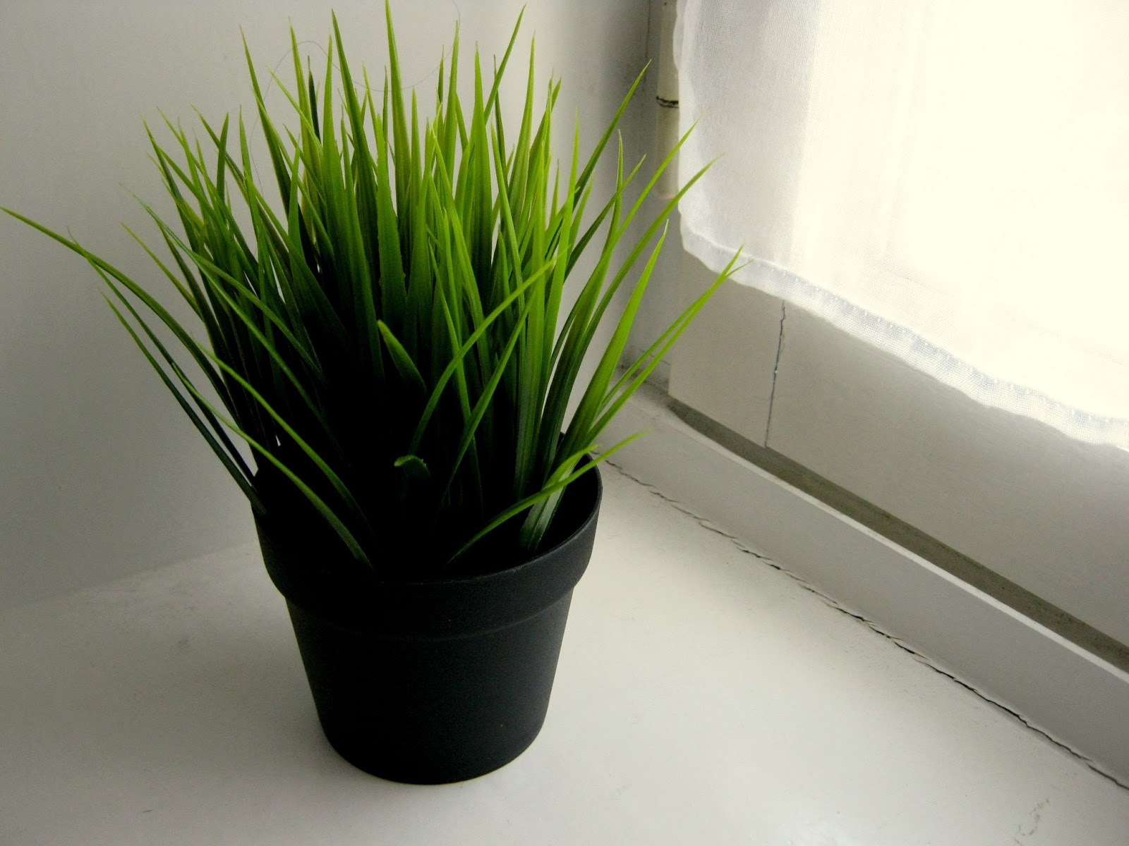 Art substance for Ikea fausse plante