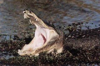 gambar binatang buas memangsa manusia