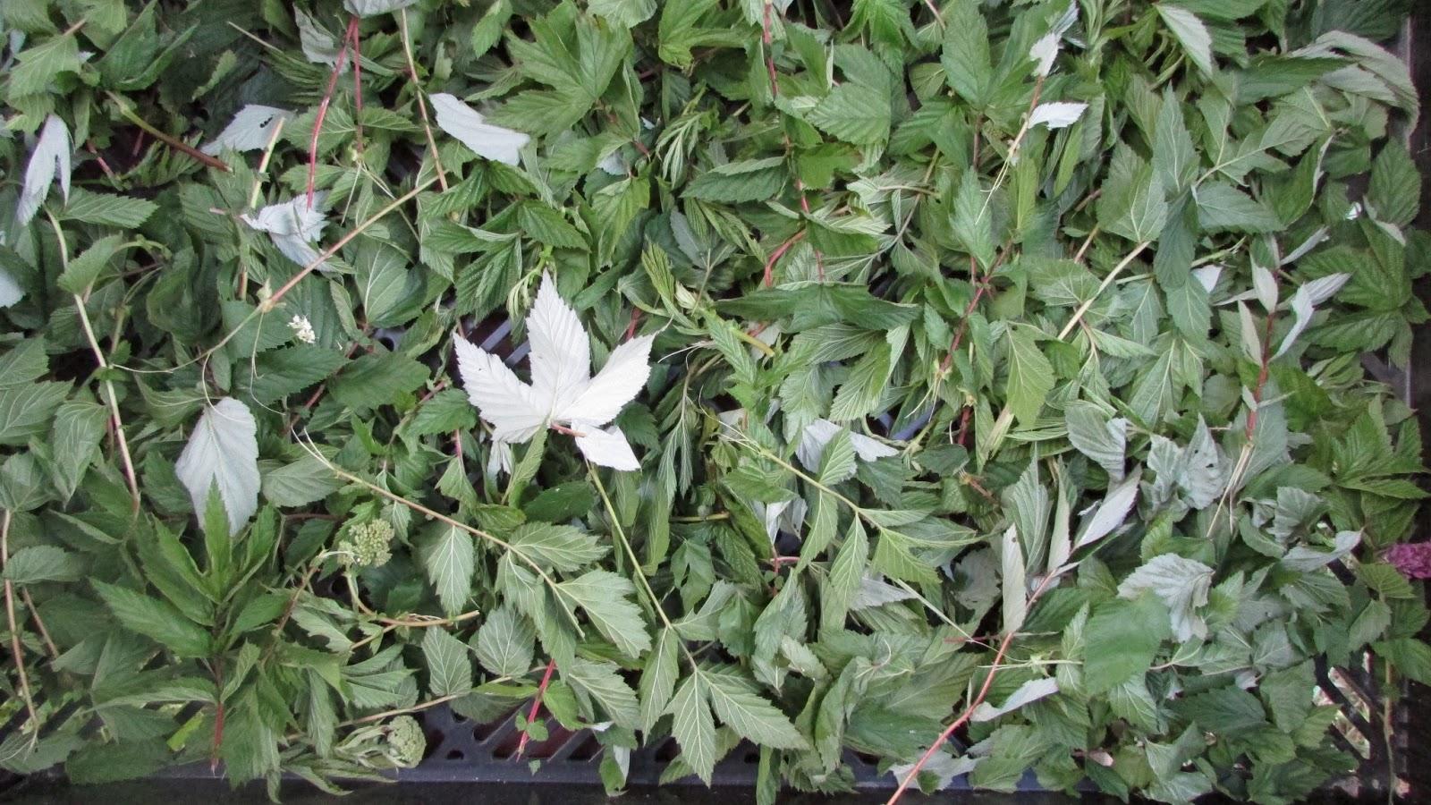 Atelier de decouverte des plantes aromatiques et medicinales juin 2013 - Liste des plantes medicinales ...