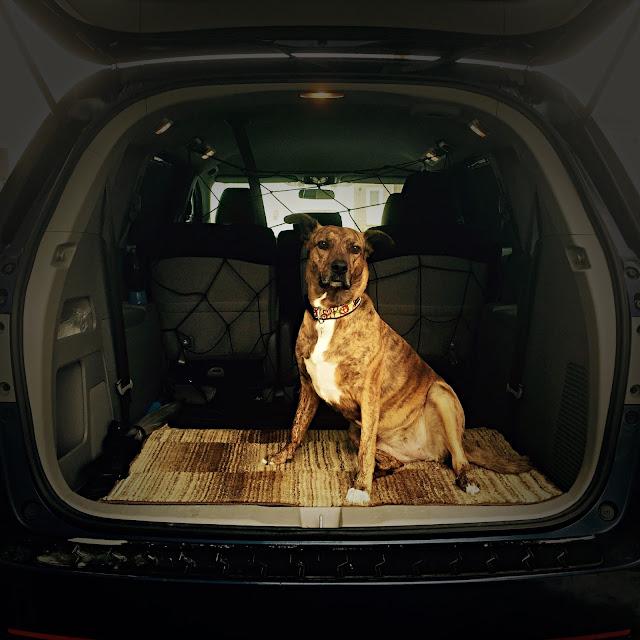 2015 Honda Odyssey cargo area Boxer dog