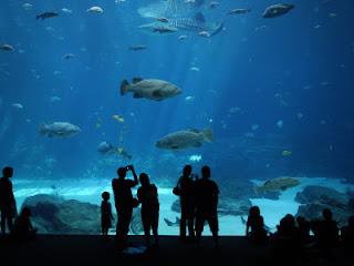 akuarium terbesar di dunia