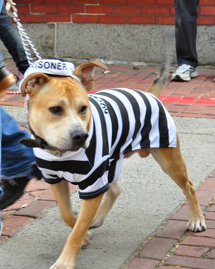 the 14 best dog costumes for halloween 2014