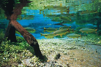 Flora e fauna do Rio Sucuri