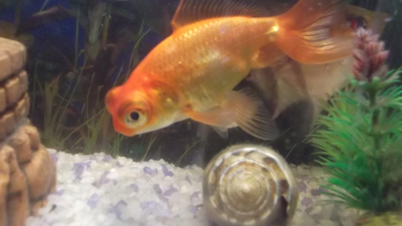 Как кормить рыбок в домашних условиях 362