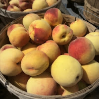 Peach Harvest Carlson Orchards MA New England Fall Events