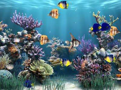 http://4.bp.blogspot.com/-zjcRhzqk2Iw/Tm1immLRG1I/AAAAAAAAApU/5gdhReVo4C4/s400/aquarium_animated_wallpaper_desktop_wallpapers-165398.jpeg