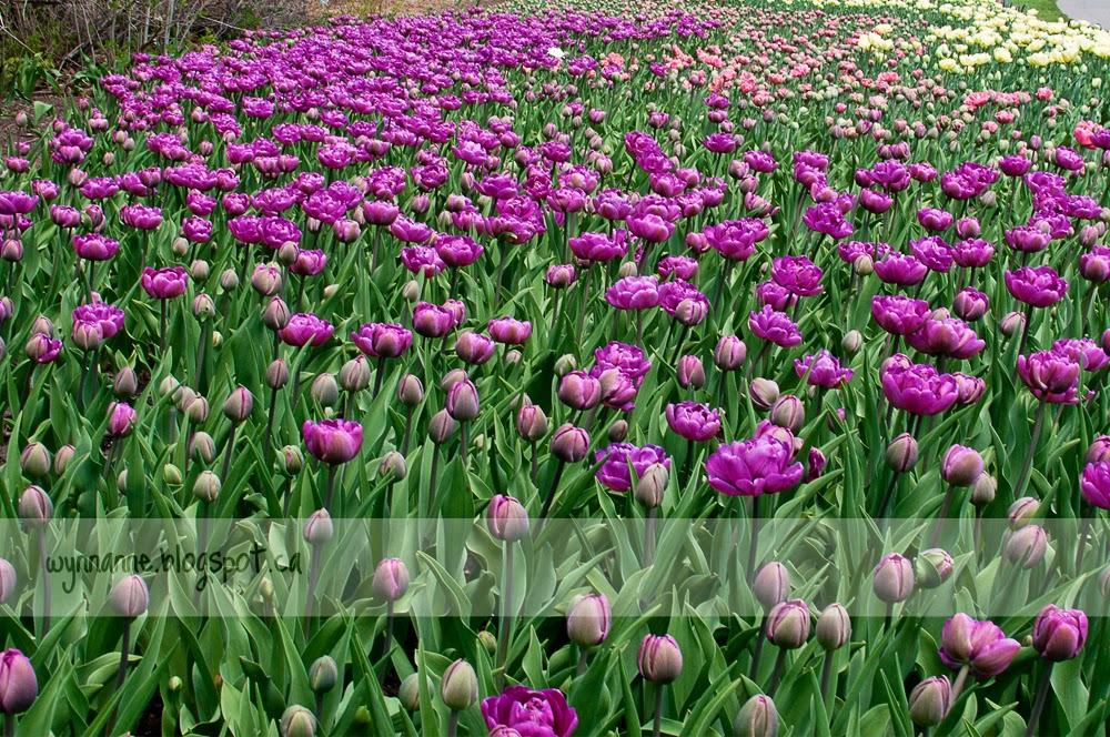 Spring in Ottawa | Wynn Anne's Meanderings