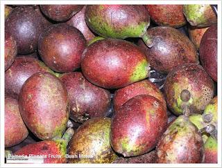 Buah Matoa, tanaman buah khas Papua dengan perpaduan rasa