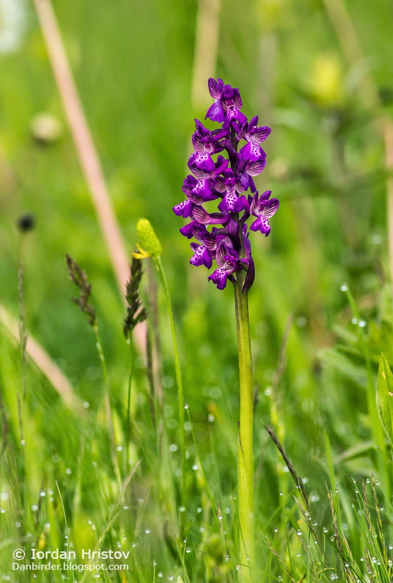 Orchid photography, copyright Iordan Hristov