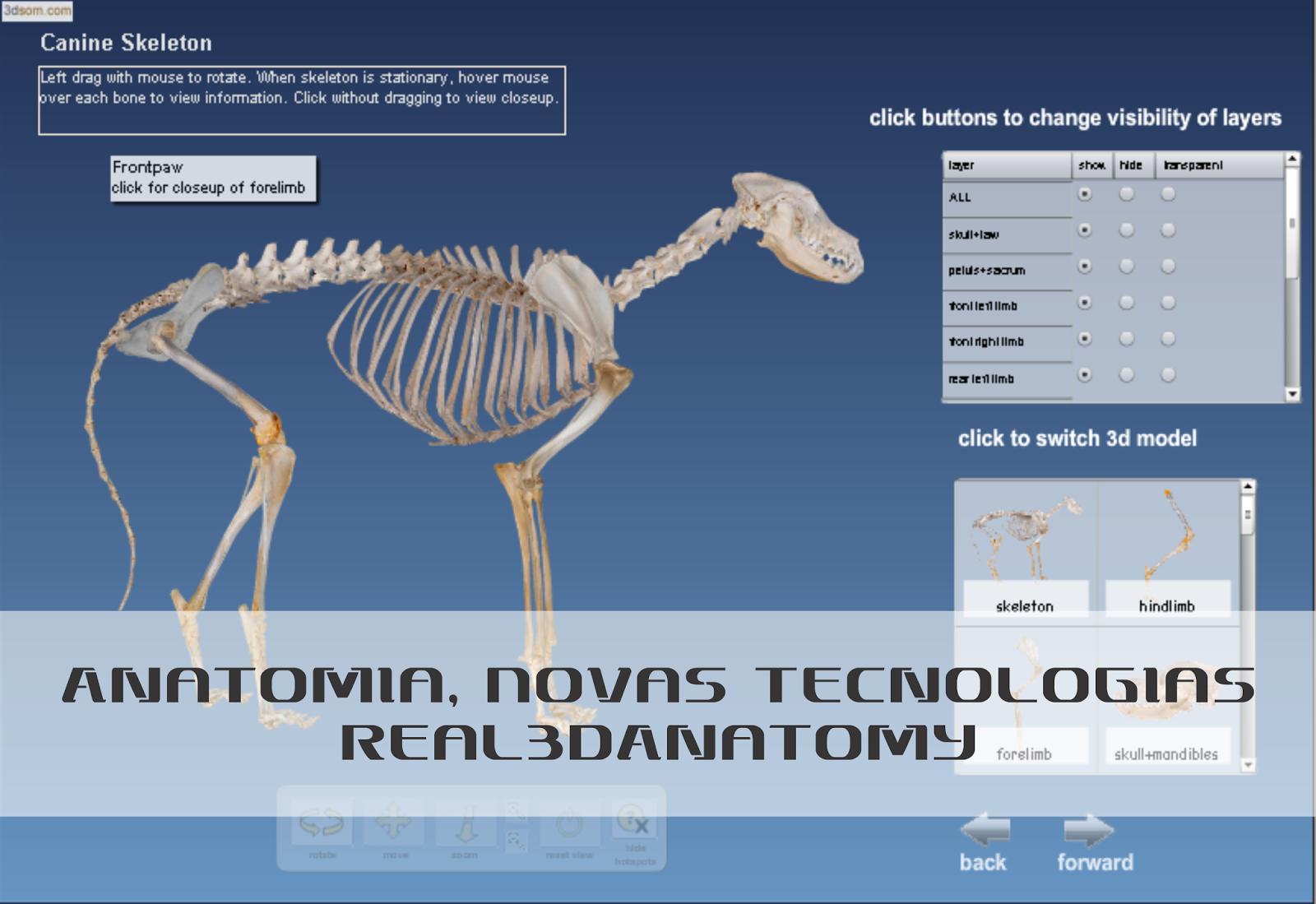 Anatomia Canina, Novas Tecnologias   Medicina Veterinária - INTA