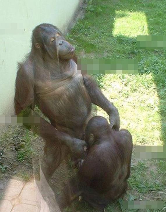Perilaku Porno Binatang Yang Unik Dan Lucu