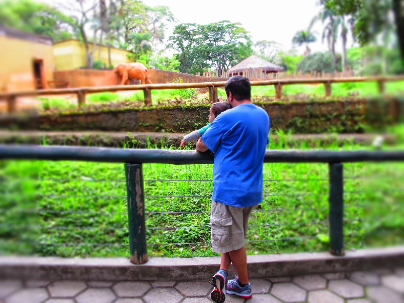 passeio-zoo-são-paulo-brasil-elefante