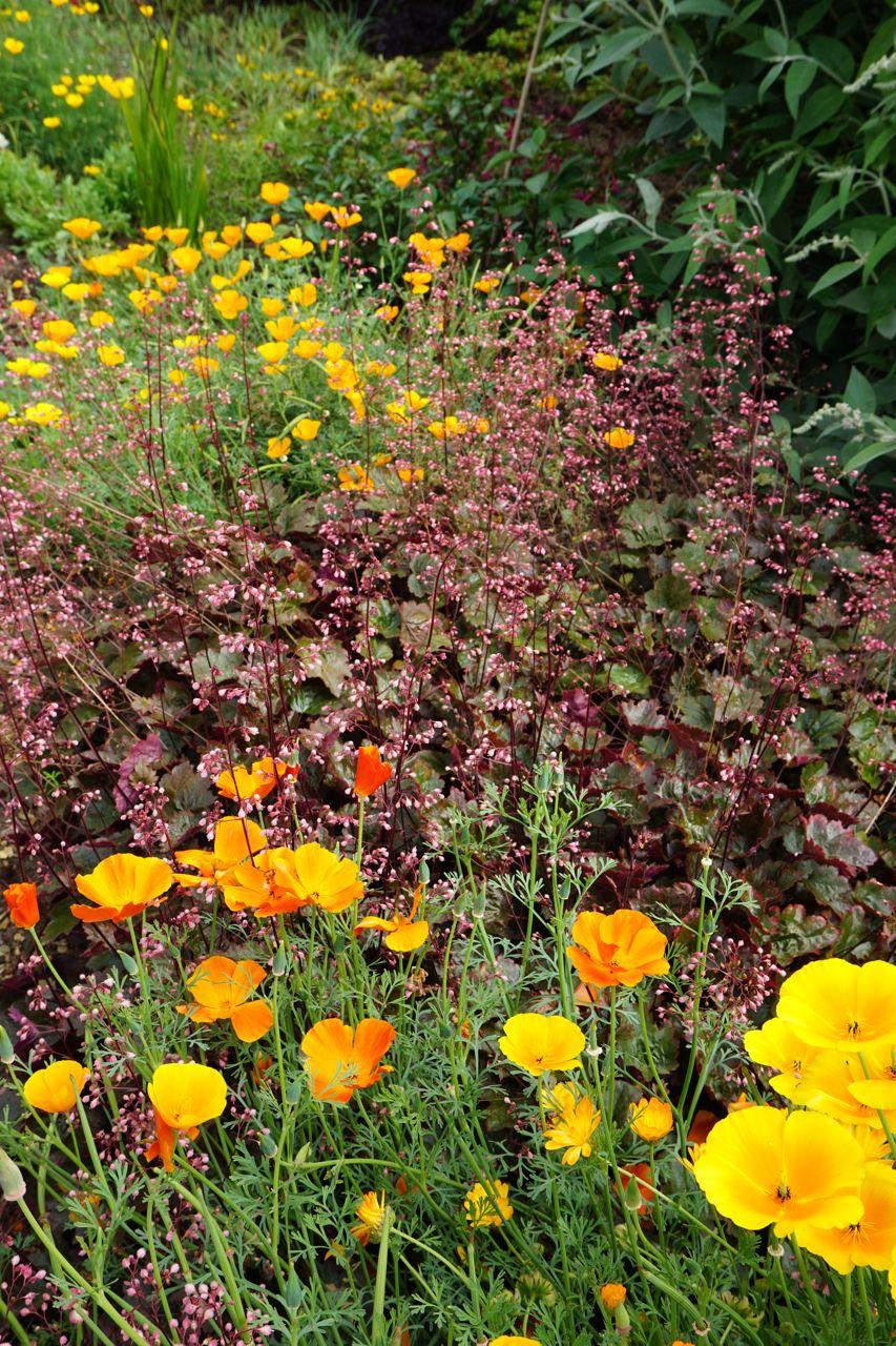 Felbrigg - a totally stunning walled garden | Yasmeen\'s Gardening Blog