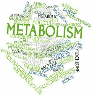 metabolism lexhansplace