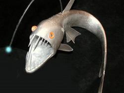 Viper Fish - Hewan Teraneh