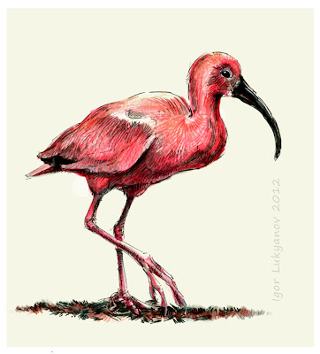 the red ibis bird, Scarlet Ibis