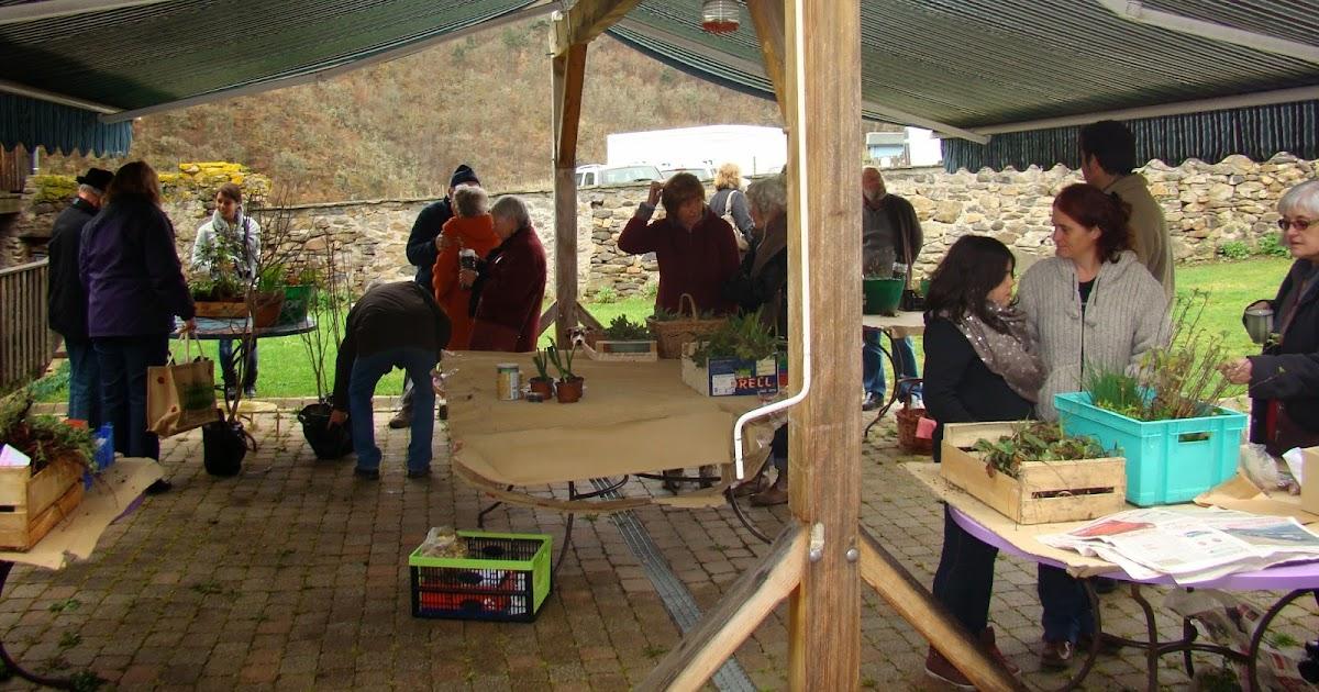 Le jardin d 39 aubeyrat troc aux plantes le 19 mars 2016 - Repiquer des framboisiers ...