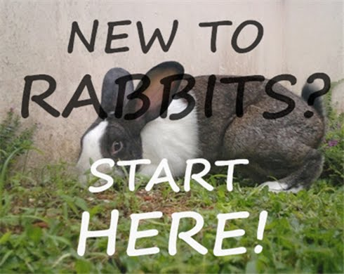 New to Rabbits? Start Here!