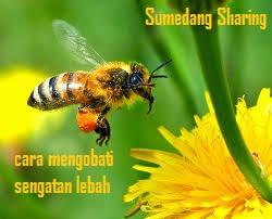 Cara Mengobati Sengatan Lebah Tawon Alami Agar Tidak Bengkak