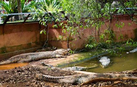 Taman Buaya di Melaka di Taman Buaya Rekreasi