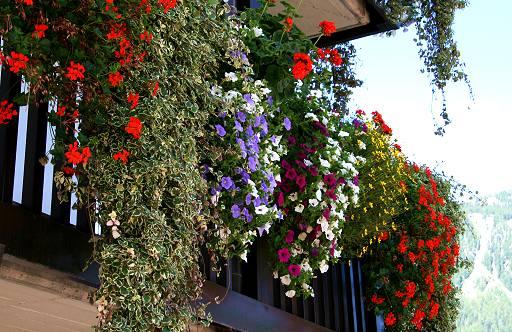 Fiori piante e giardini del mondo idee per balconi e for Terrazzi con piante e fiori