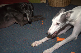 Blue and Bettina greyhounds love carrots II