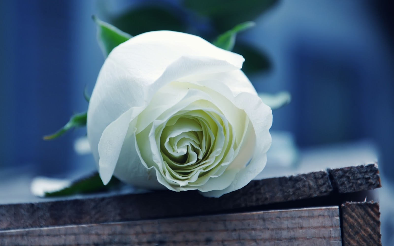 how to make a rose appear out of thin air
