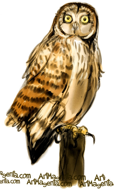 Short-eared Owl sketch painting. Bird art drawing by illustrator Artmagenta