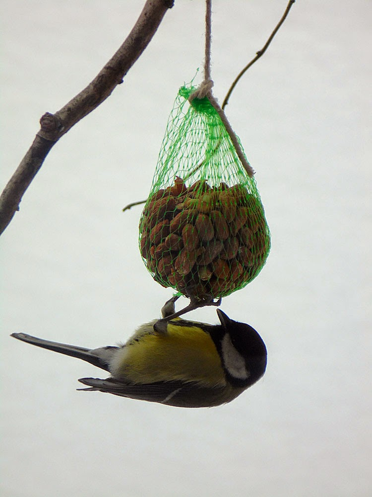 photos of Winter garden birds  by Andie Gilmour