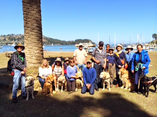 Members of the Foggy Doggies Alumni Chapter pose with their guide dogs on Angel Island next to a palm tree.