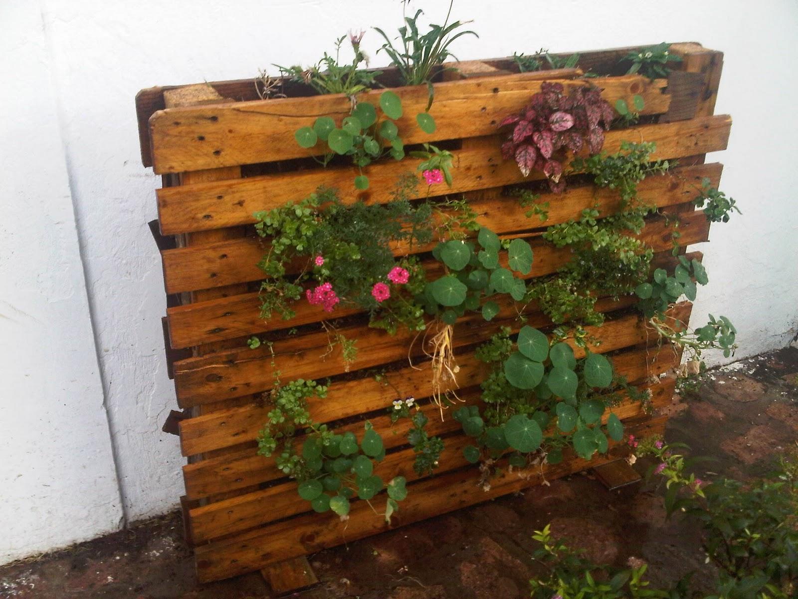 Mundo verde y vertical muro vertical con palet de madera - Muro de madera ...