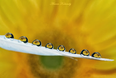 water drop flower