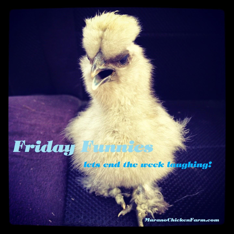 Friday fnnies, chicken jokes