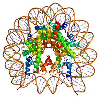 Computer generated image of the MacroH2A molecule