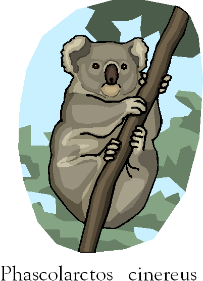 Koala | Phascolarctos Cinereus Free Clipart