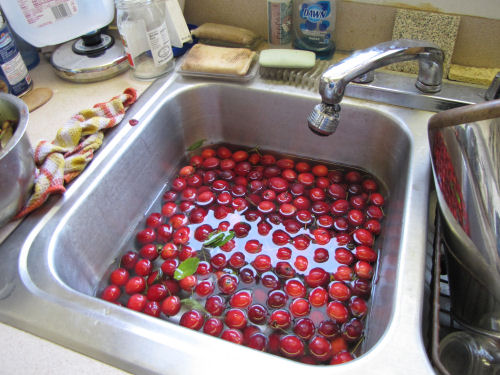 crabapples in sink