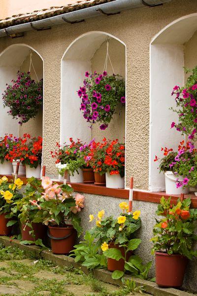Banco de im genes plantas y flores en el jard n de la for Jardines de la hacienda