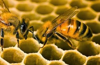 Keajaiban Lebah Menurut Alquran