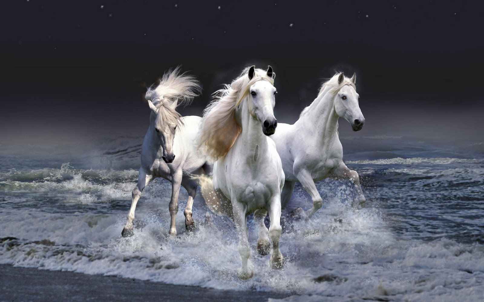 three white horses at beach
