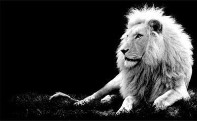 Foto León en blanco y negro
