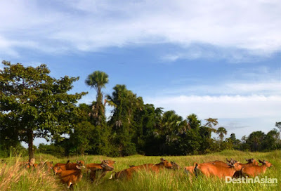 Rawa Aopa Watumohai; Taman Nasional Raksasa di Sulawesi