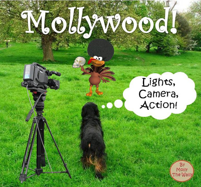 Molly The Wally & Hooray for Mollywood!