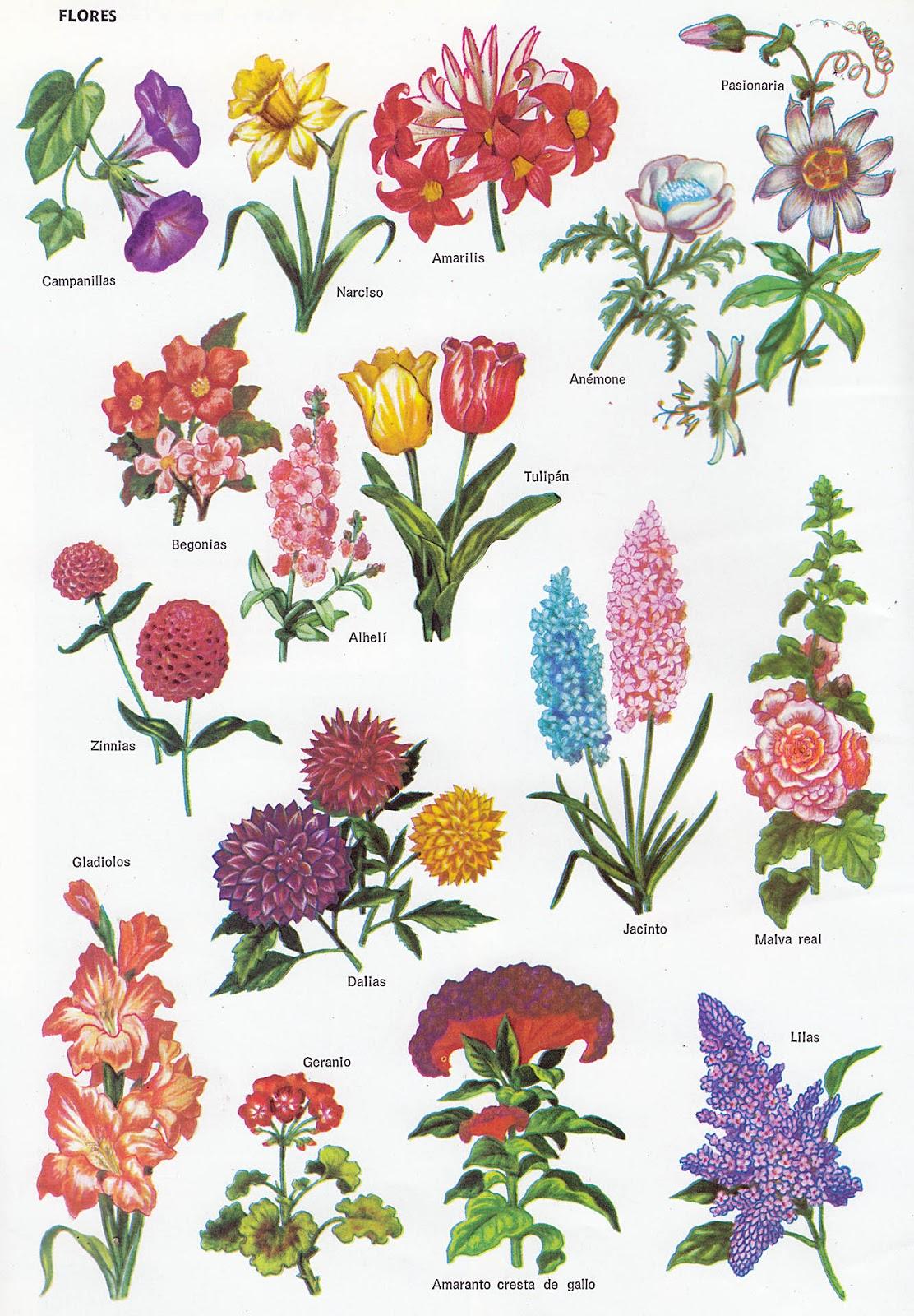 Catalogo de plantas ornamentales de sinanche yucat n of for Plantas decorativas