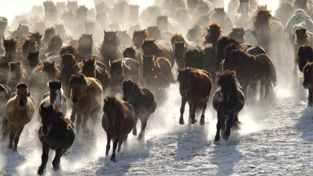documentaire film Terra Yann Arthus Bertrand chevaux sauvages