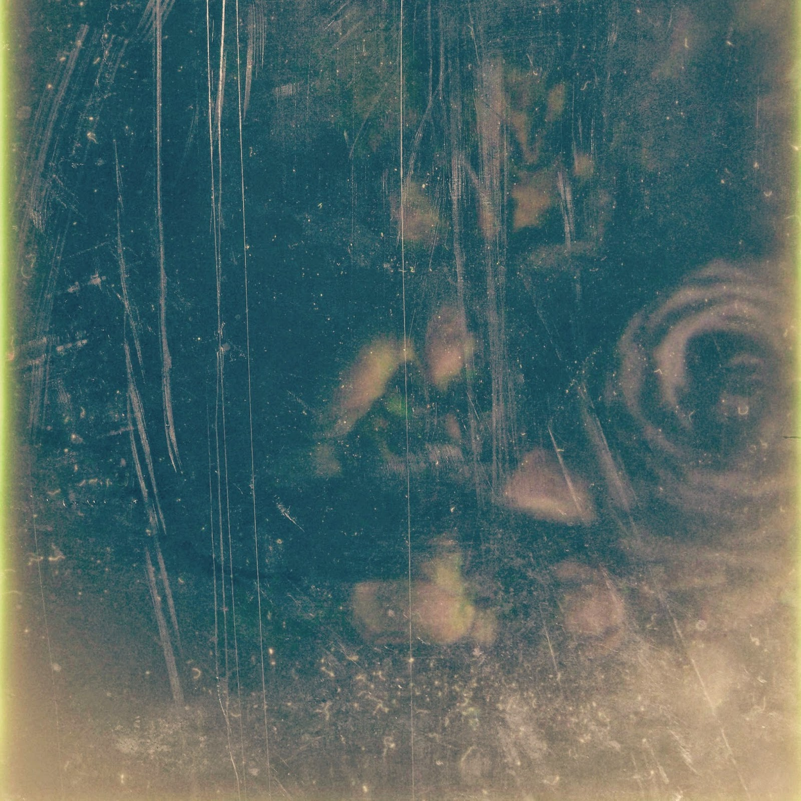 A polaroid of roses