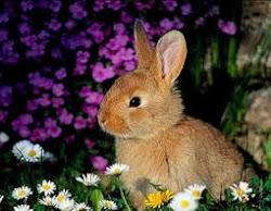 el conejo la mascota ideal