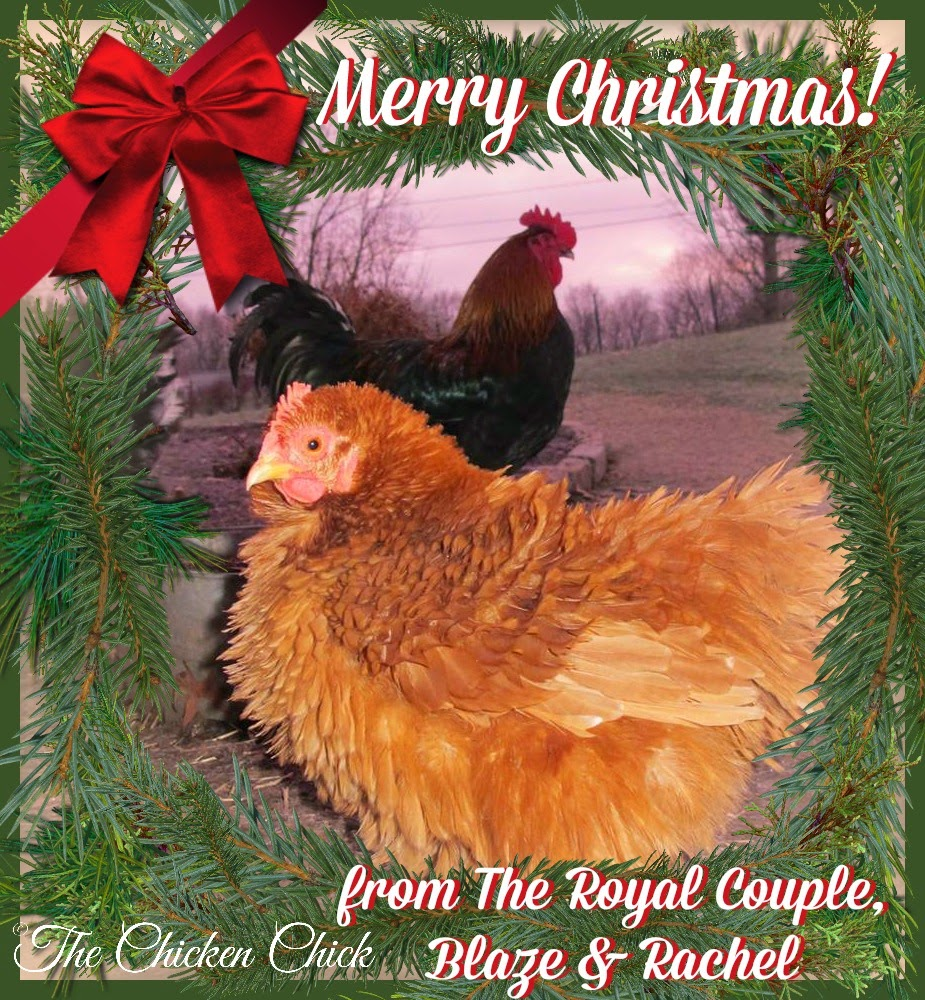 Merry Christmas from Blaze & Rachel, The Royal Couple