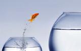 Fish Jumping ECNL